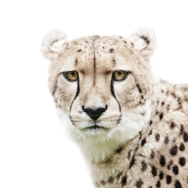 Портреты животных Мортена Колдби