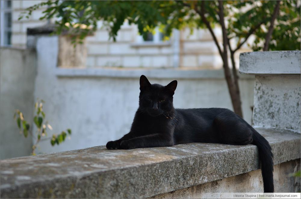 Евгениос тривизас последний чёрный кот