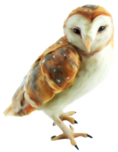 priss_flutteringleaves_owl.png