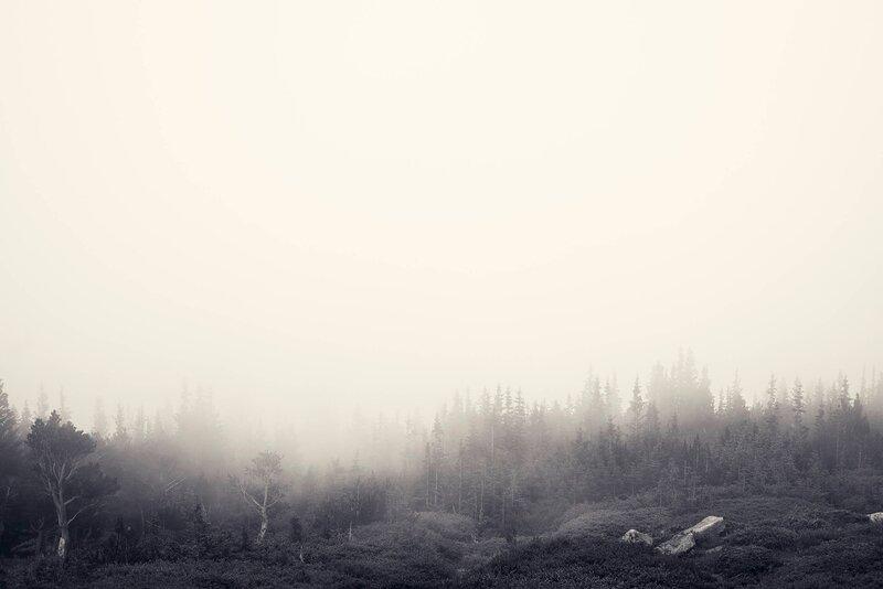 Foggy Forest - Jake Stewart.jpg