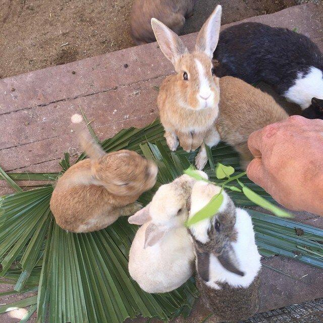 кролики в отеле