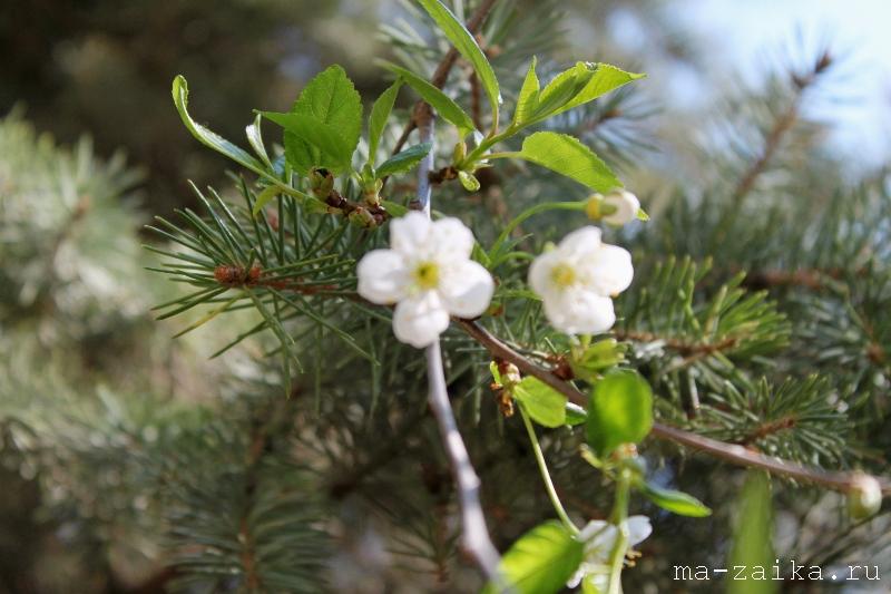Майские радости в цвете, Саратов, 8 мая 2011 года.
