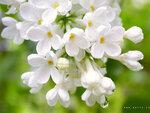 flower_0329