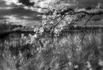 Фото Зорий Файн. Canon 350D (IR), монокль 80 мм