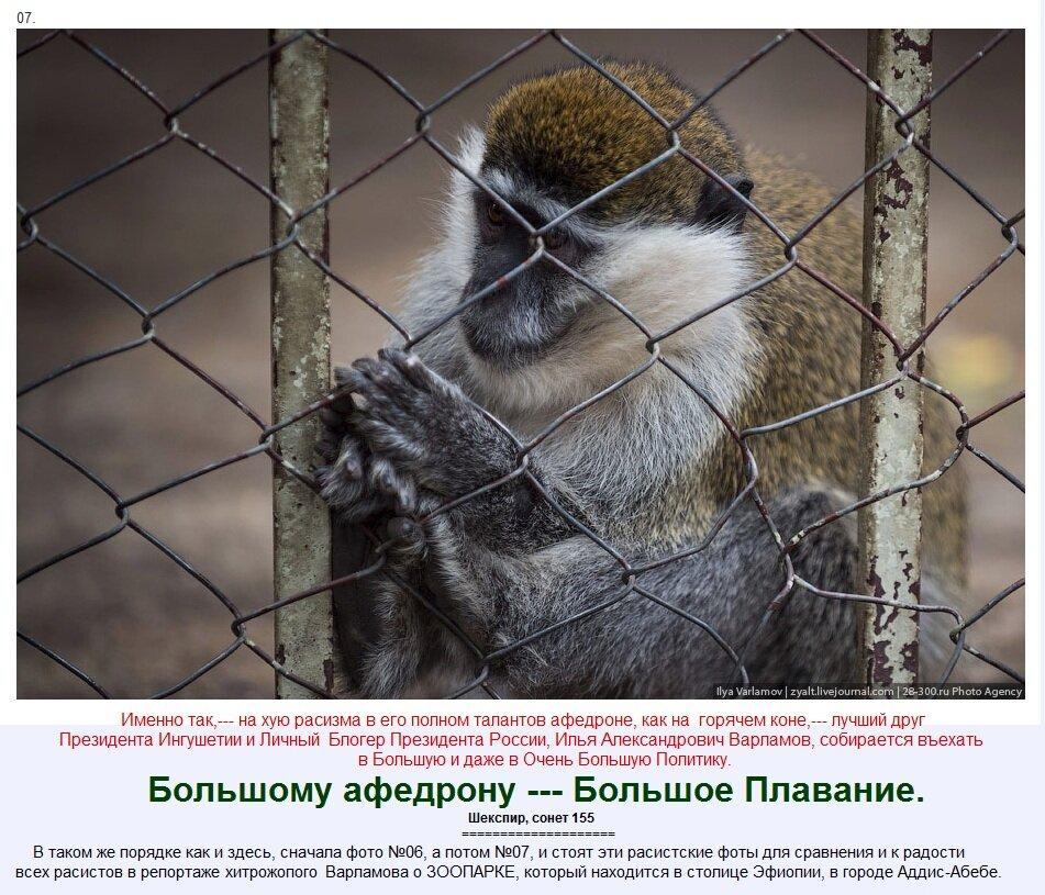 Расист Илья Варламов в Эфиопском Зоопарке.