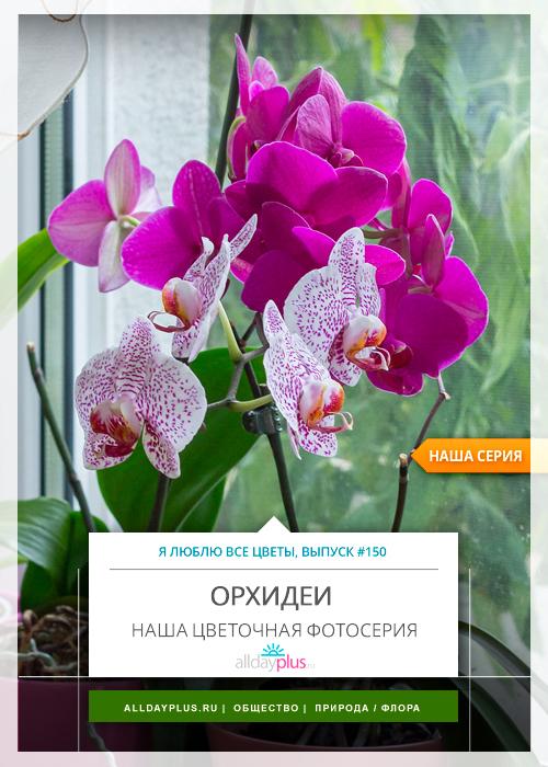 Я люблю все цветы, выпуск 150 | Орхидея - «Покровительство богини».
