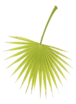 LaurieAnnHGD_PalmBranch2.png