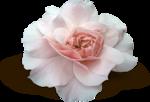 valentina_shabbyfall_el7_sh.png