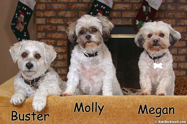 Ken Rockwell DSC_8008-dogs.jpg
