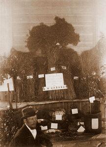 Вид экспонатов Д. М. Буйвида (по сельскому хозяйству и огородничеству)