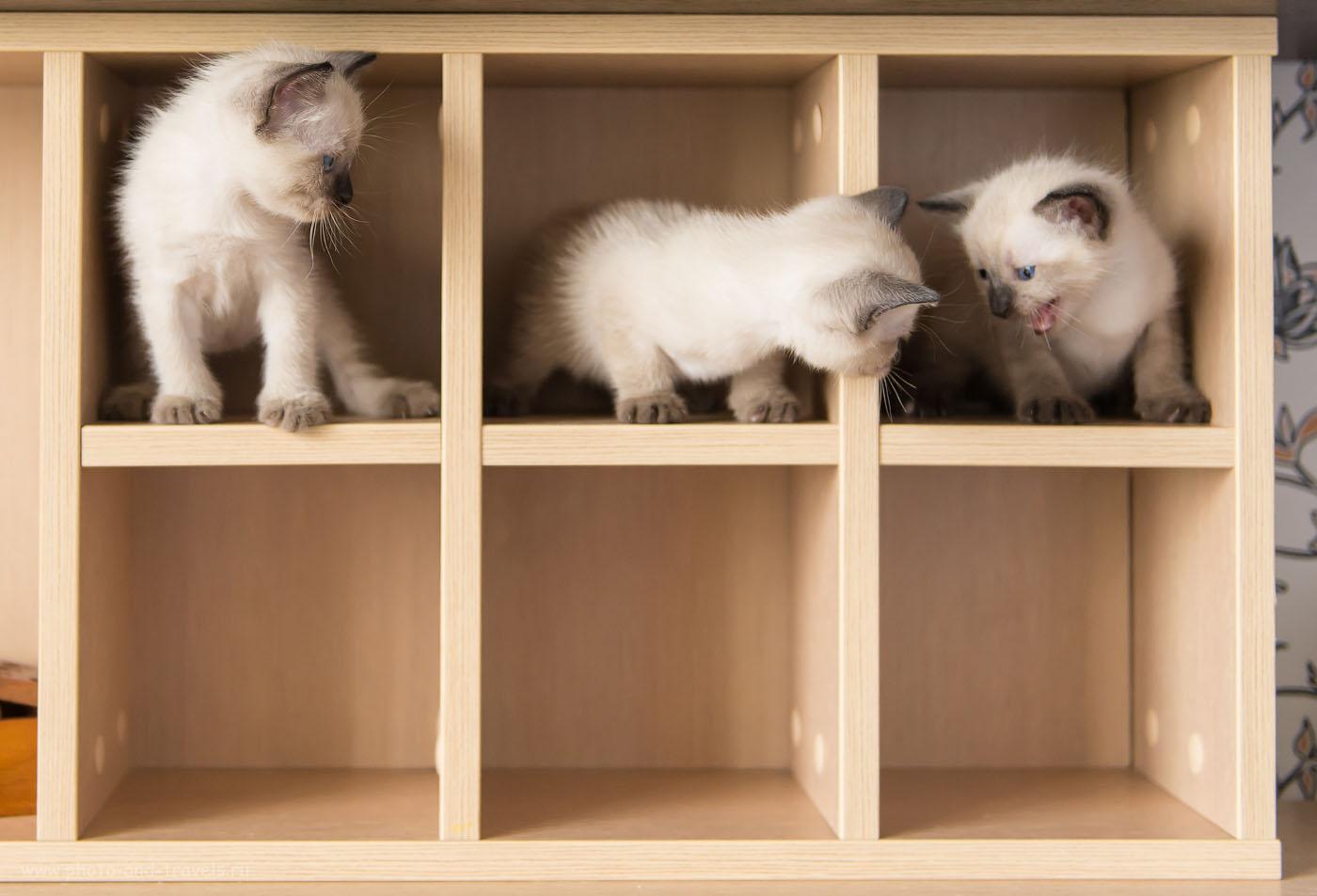 Фото 6. Съемка котят в домашних условиях. Все - за одного! (800, 40, F/2.8, 1/320)