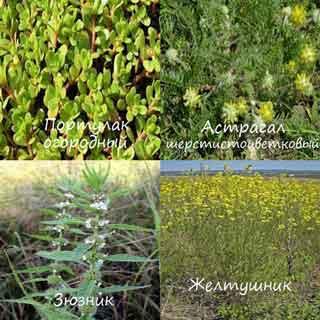 Полезные для сердца травы