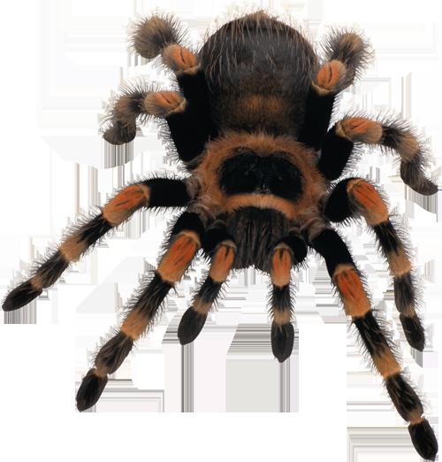 Пауки и паутина – Клипарт PNG