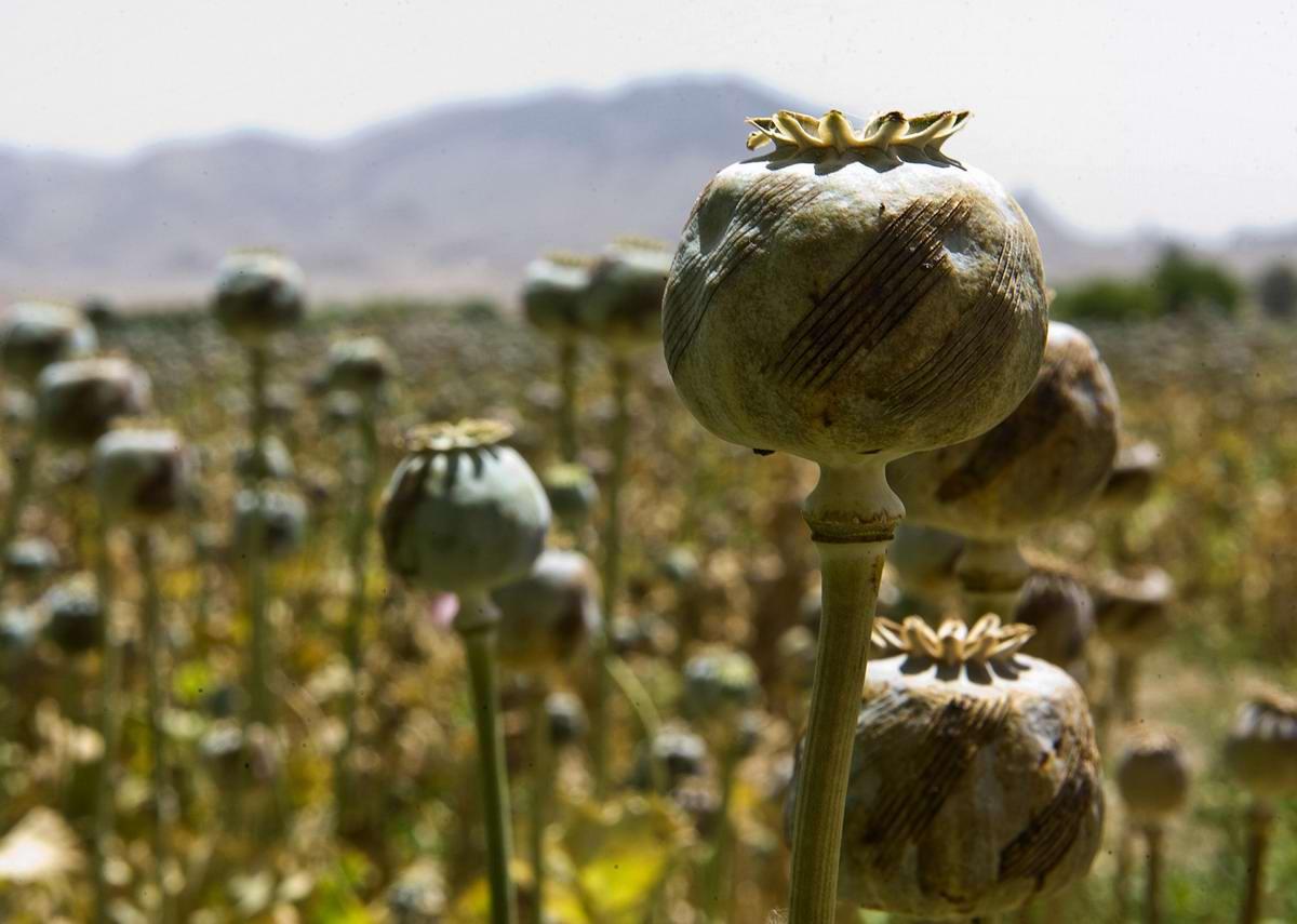 Посреди маковых полей Афганистана - фотографии военнослужащих корпуса морской пехоты США (34)