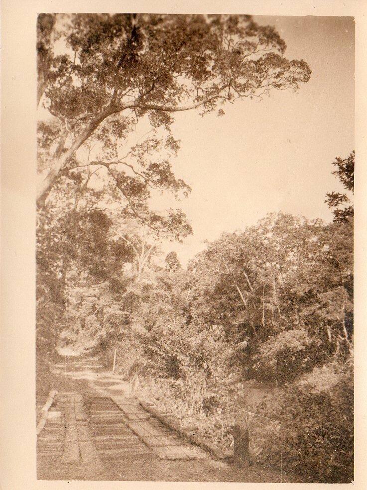 1930. Западная Африка. Мост в лесной местности