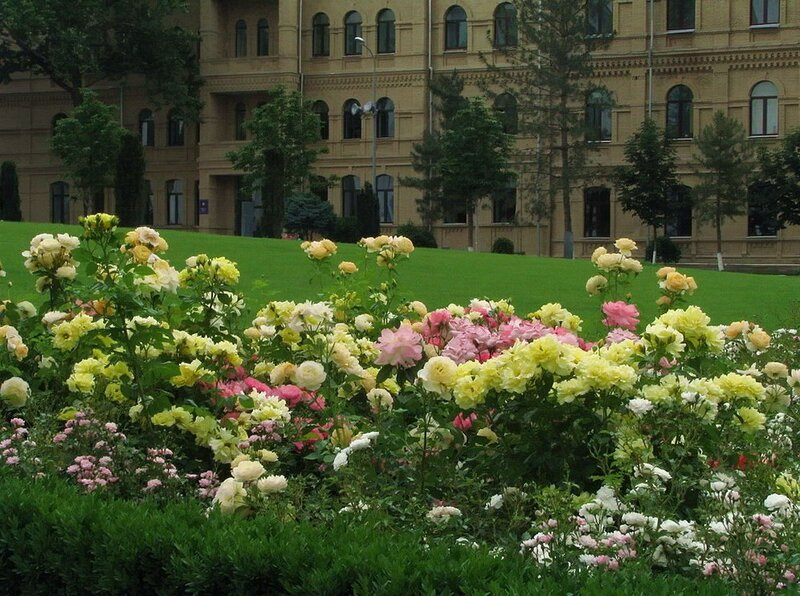 Весна в Ташкенте. Узбекистан