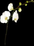 «восточная красота» 0_61ac3_ad63de94_S