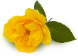 YELLOW ROSE 2.png