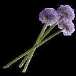 «Violet_Surprise» 0_64087_55d10953_S