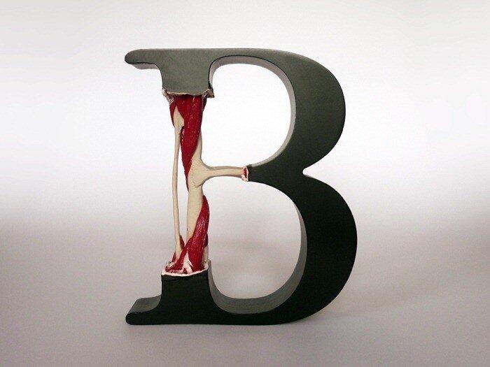 анатомия буквы