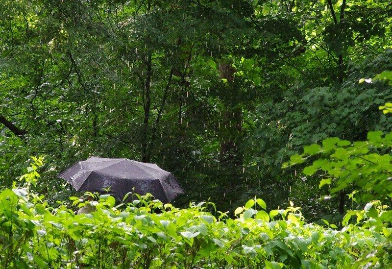 дождь и зонтик