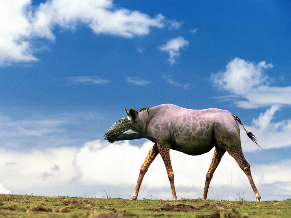 Смешные животные фотошоп, оформление открыток картинки