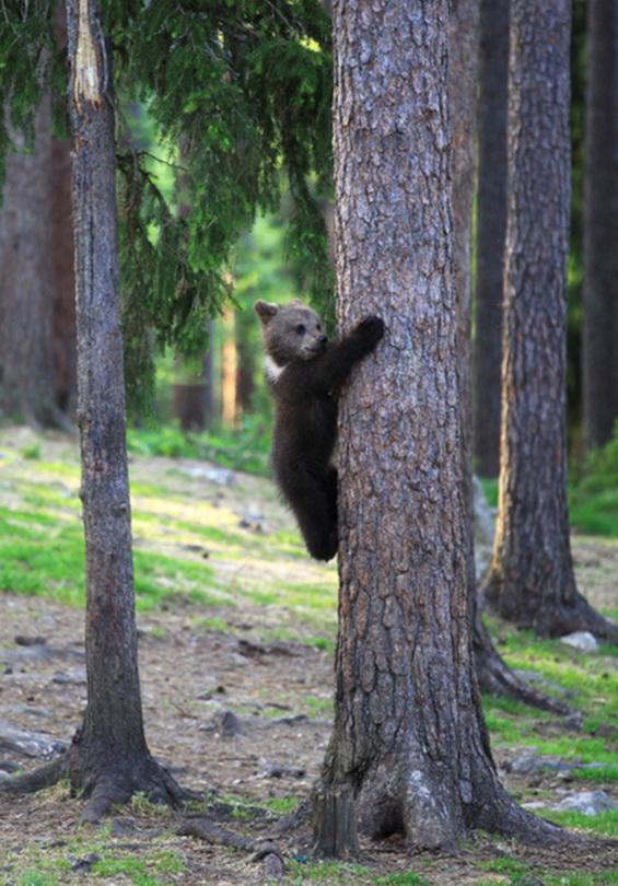 Дискотека в лесу