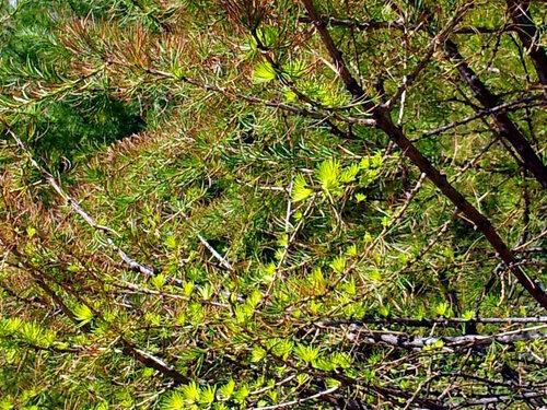Весна Фимбул