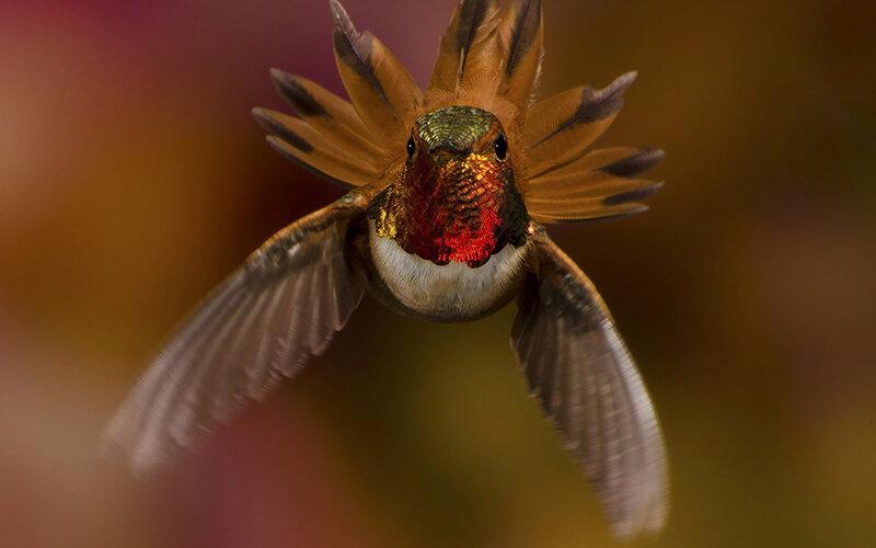 colibri-18.jpg