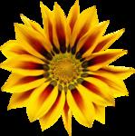 Flores (4).png