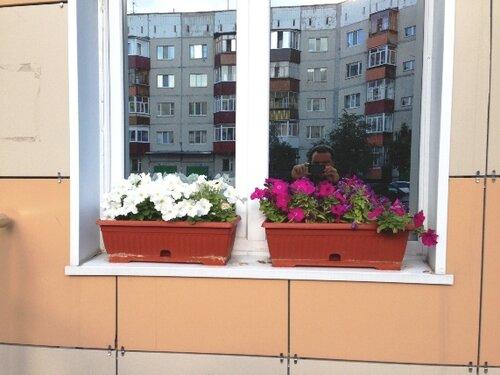 """Цветы, лето на Дзержинского 3 """"Б"""""""