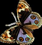 Бабочки  0_6b14f_996fd4ee_S
