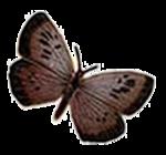 Бабочки  0_6b158_e221781a_S