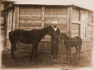 Кобылица рыжая (8 лет)  казака Богданова ( похвальный отзыв).