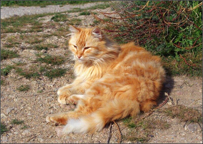 Кот №1 - Нигилист