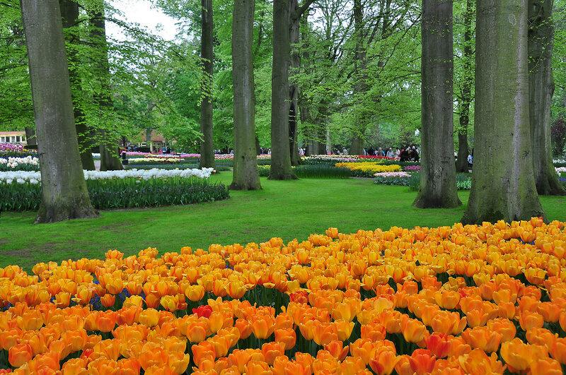 Весна цветеньем украшает землю