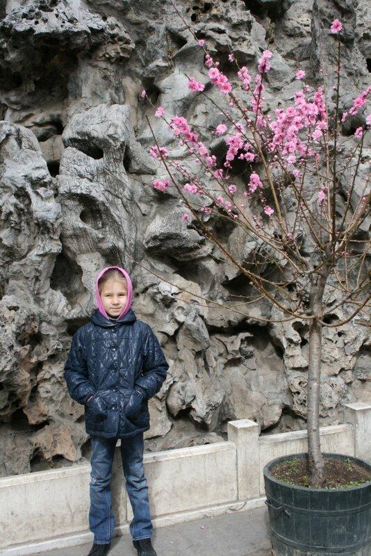 Галка в Императорском саду