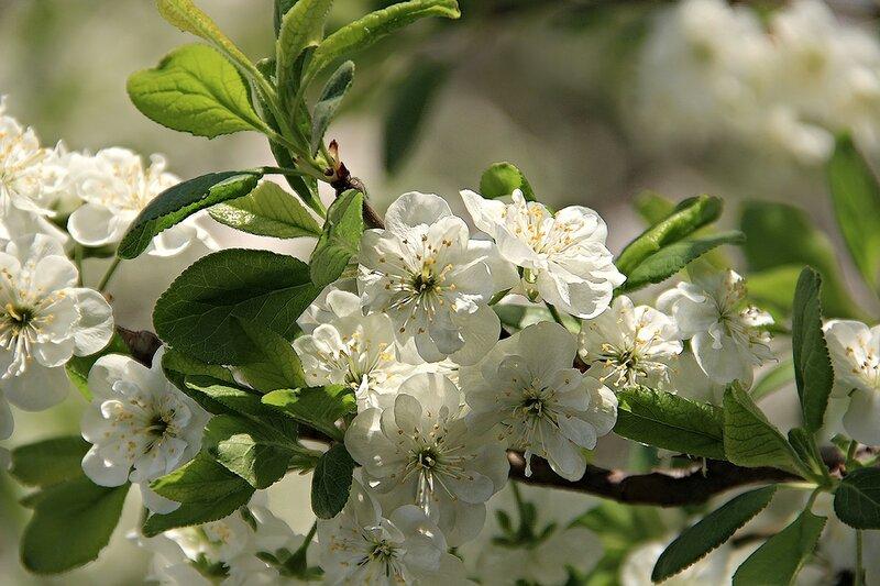 Весна-невеста