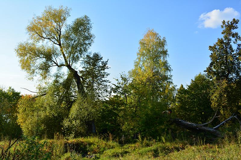 осенний парк 17