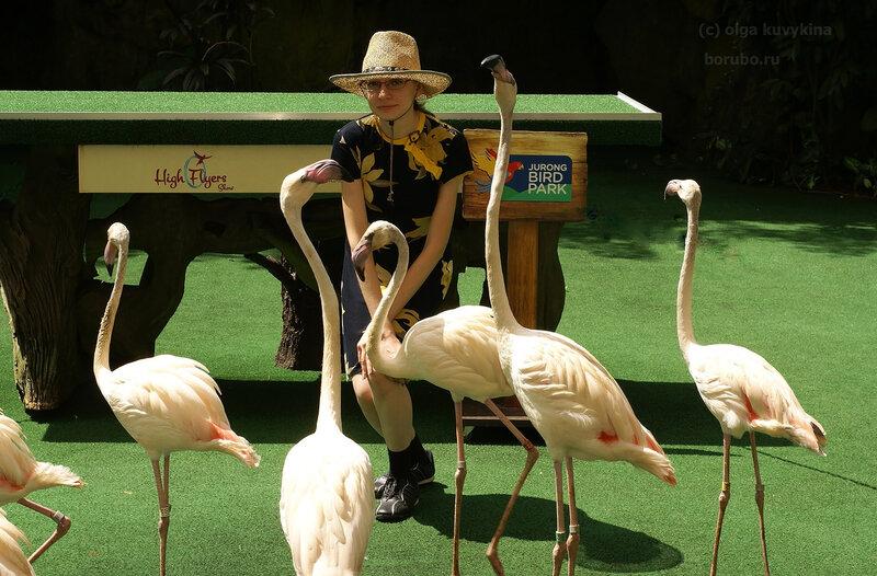 Молодые фламинго в парке птиц Сингапура