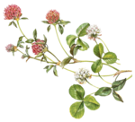 JB_MelindaCoss_Flowers04.png