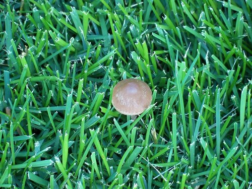 Газон с грибами
