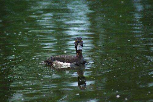птицы удельного парка