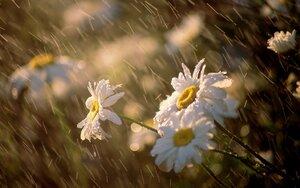 Какую погоду стоит ожидать в Молдове на конец лета?