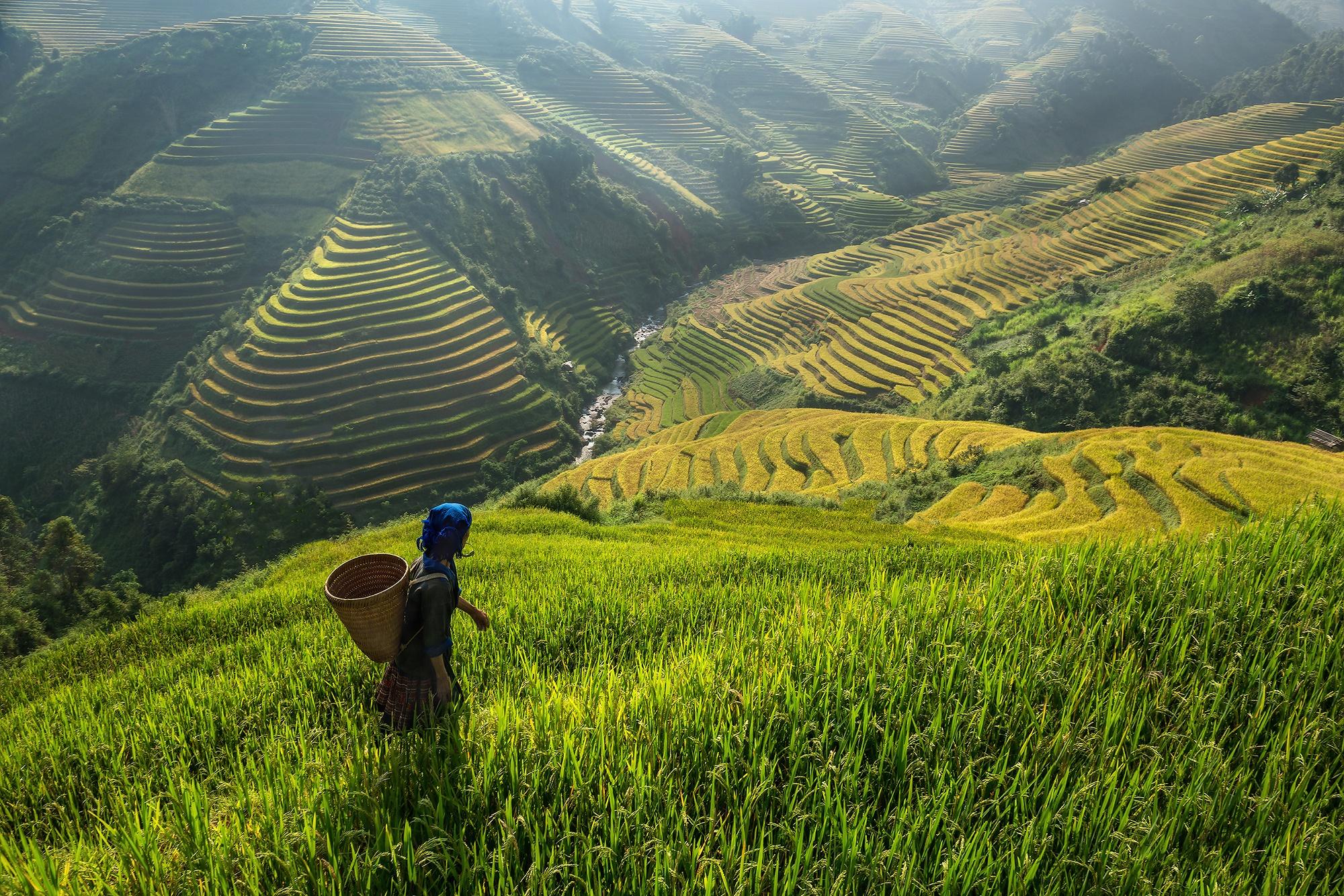 Картинки по запросу Рисовые террасы вьетнам