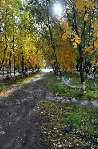 Фото города Инта №7237  Пешеходная дорожка в сторону площади Комсомольской, вид недалеко от юго-восточного угла Социалистической 3 16.09.2014_12:01
