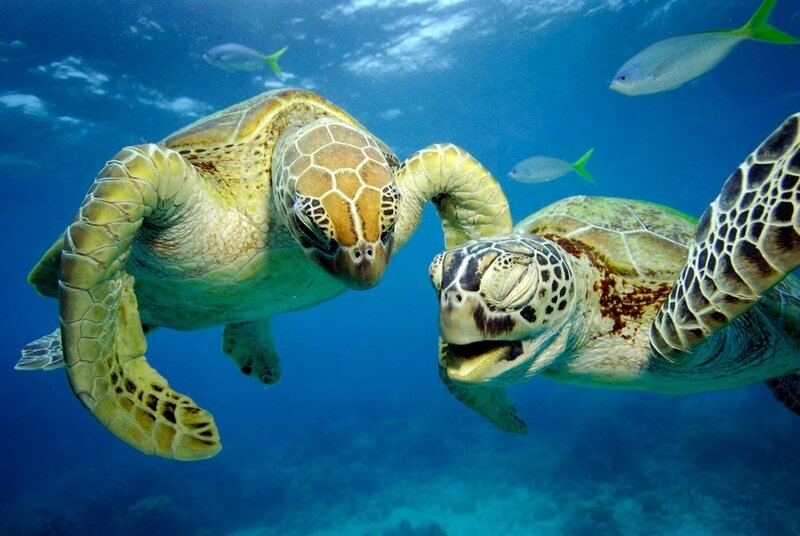High Five Turtles