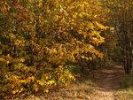 Рябиновая осень