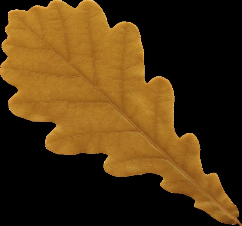 Картинка лист дубовый для детей