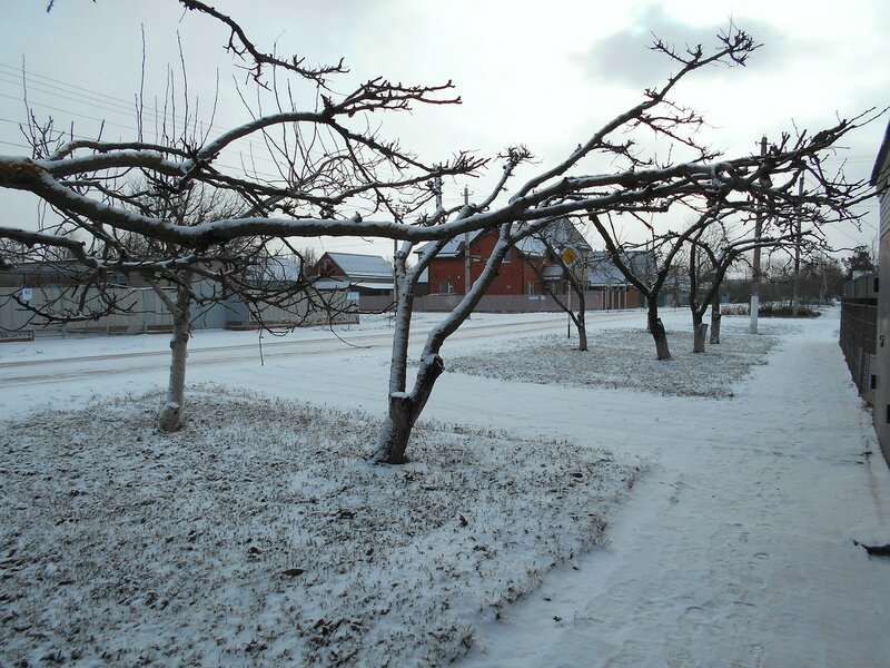 Ветви, зима ... DSCN3109.JPG